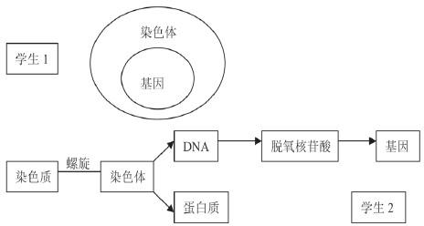 与基因的关系画出概念图